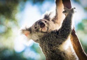 Adventure Australien, Australia Zoo - HÖJSKOLENDK, Højskole i Udlandet