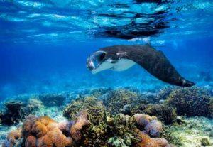 Adventure Bali, Manta Ray dykning - HÖJSKOLENDK, Højskole i Udlandet