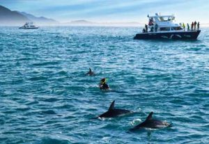 Adventure NZ, Svøm med delfiner - HÖJSKOLENDK, Højskole i Udlandet