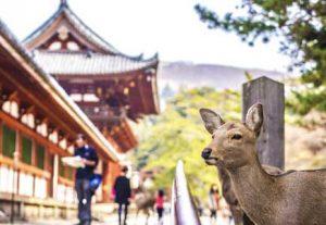 Adventure i Japan - HÖJSKOLENDK, Højskole i Udlandet - Nara