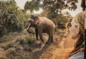 Adventure i Sri Lanka, Kaudulla National Park - HÖJSKOLENDK, Højskole i Udlandet
