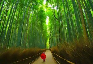 Japan4 - rundrejse og eventyr - højskole i udlandet