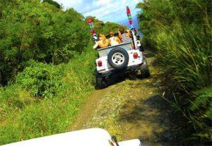 Jeep Safari - HÖJSKOLENDK, Højskole i Udlandet