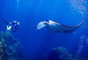 Manta Ray Diving - HÖJSKOLENDK, Højskole i Udlandet