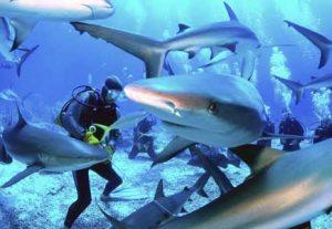 Shark diving - HÖJSKOLENDK, Højskole i Udlandet
